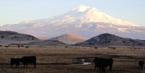 20 doc. Mt. Shasta, 1-26-2016 552